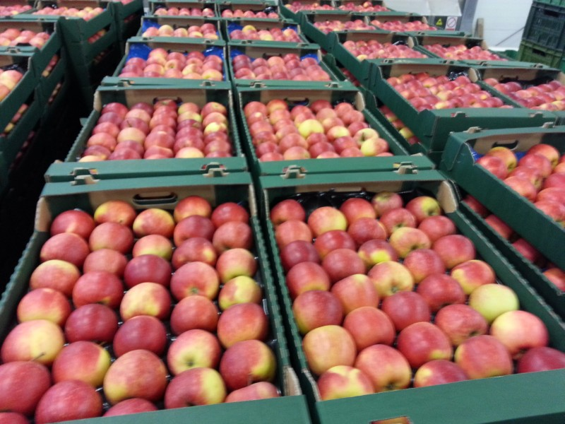 polish apples - producers of fruits and vegetables Poland